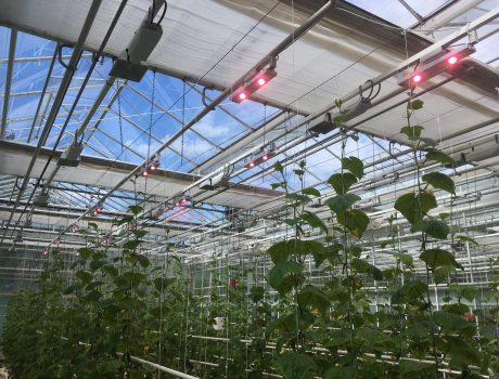 ГК «Свитлотек» — Освещение экспериментальной теплицы (I очередь)